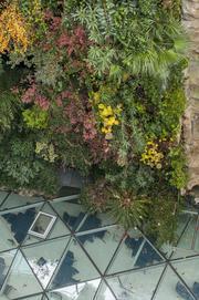 Jardin colgante-56871jpeg